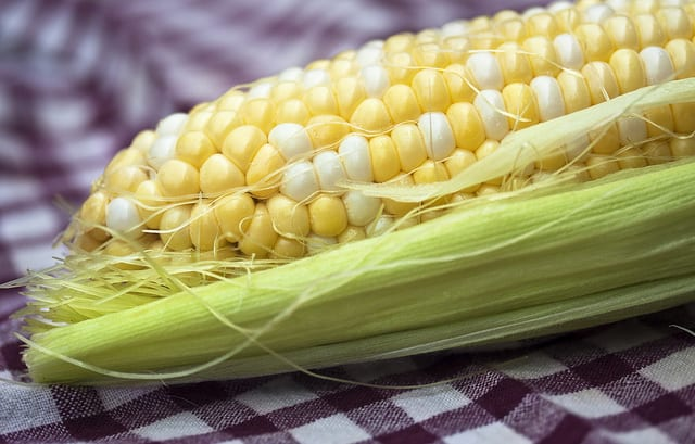 Are GMO foods safe to eat