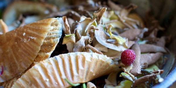 Food scraps in a compost bin.