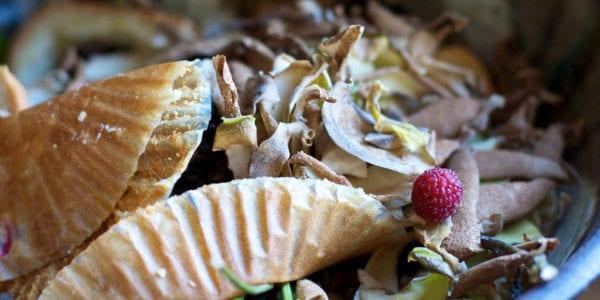 Food scraps in a compost bin.