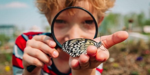 Small boy looking at butterfly through magnifying glass