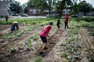 Volunteers working the field at the Urban Roots farm.