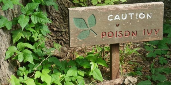 Sign with poison ivy plants around
