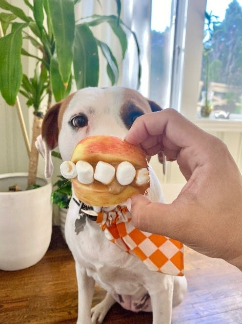 Apple with marshmallow teeth being held in front of a dog's mouth
