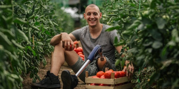 Young farmer with prosthetic leg picking tomato in greenhouse